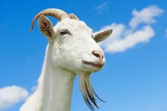 """投资养羊啦 一起发""""羊财"""""""