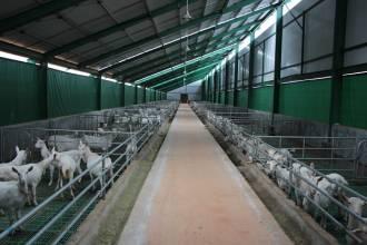 好羊奶粉不二法则 养好羊才能喝好奶