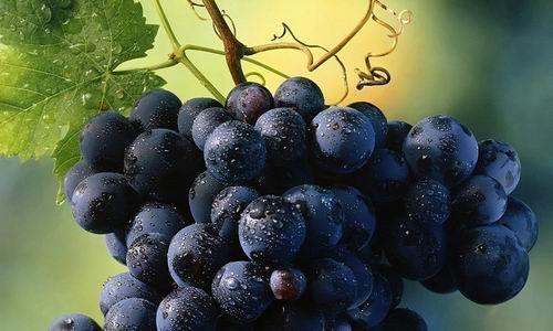 葡萄的功效与作用,吃葡萄有什么好处?