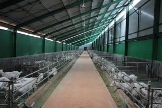 鸿辉乳业规模化养殖为养羊啦羊奶粉解除后顾之忧