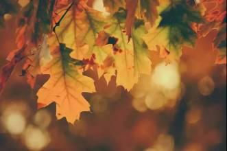 秋季养生食谱,会吃很重要 !